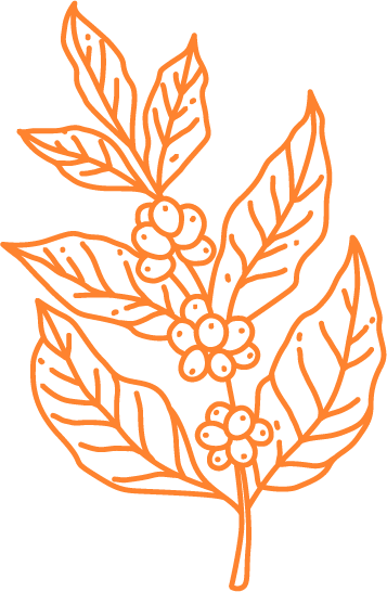 coffee-beans-plant